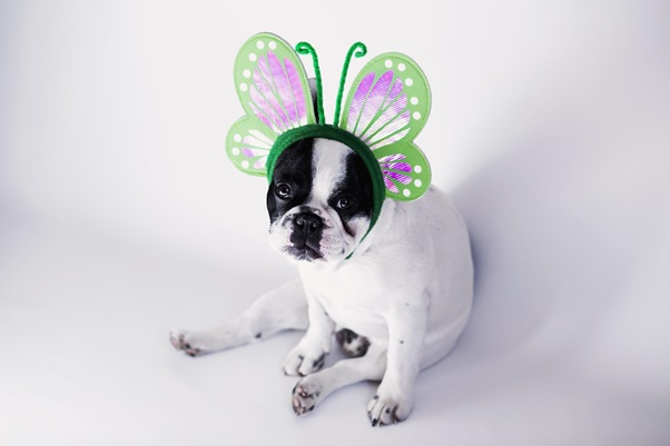 Halloween 2019: Costume Ideas For Your Dog