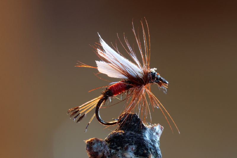 The Best Flies for Trout Fishing