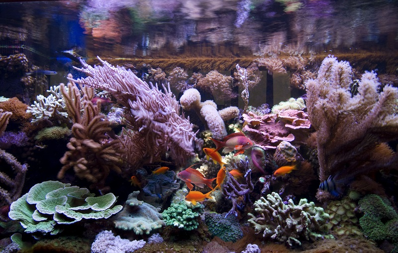 Know About The Best Aquarium Bacteria Supplement To Get In Home