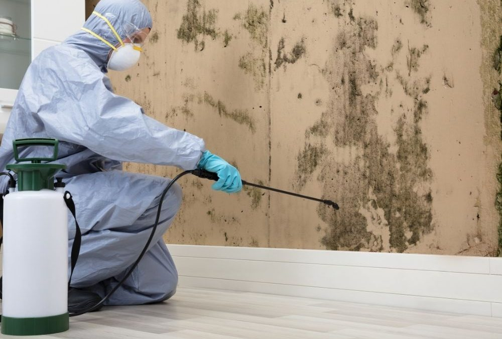 Mold Remediation in Commercial Buildings