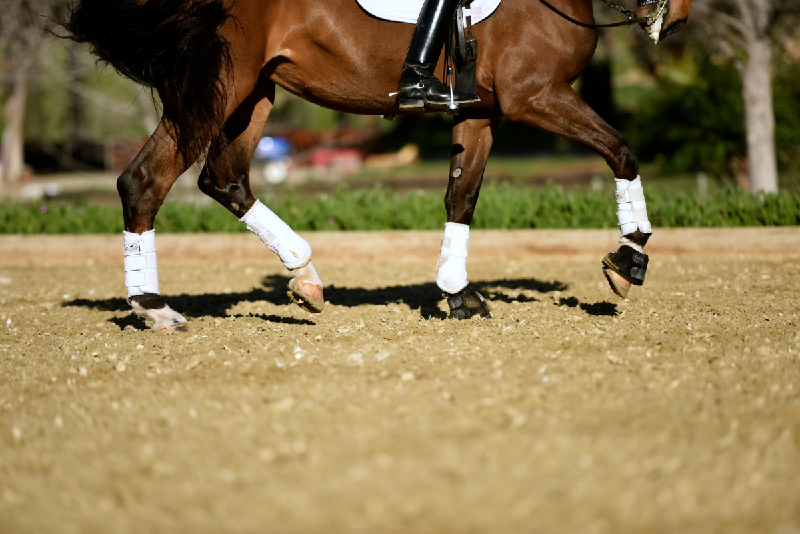Why Good Footing is Important for Horse Arenas?