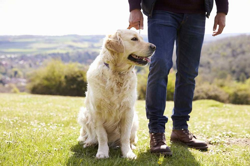 How to know if an online pet boarding service provider is reliable?