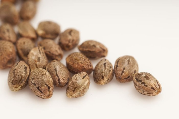 7 Effective ways of selecting pot seeds for retail