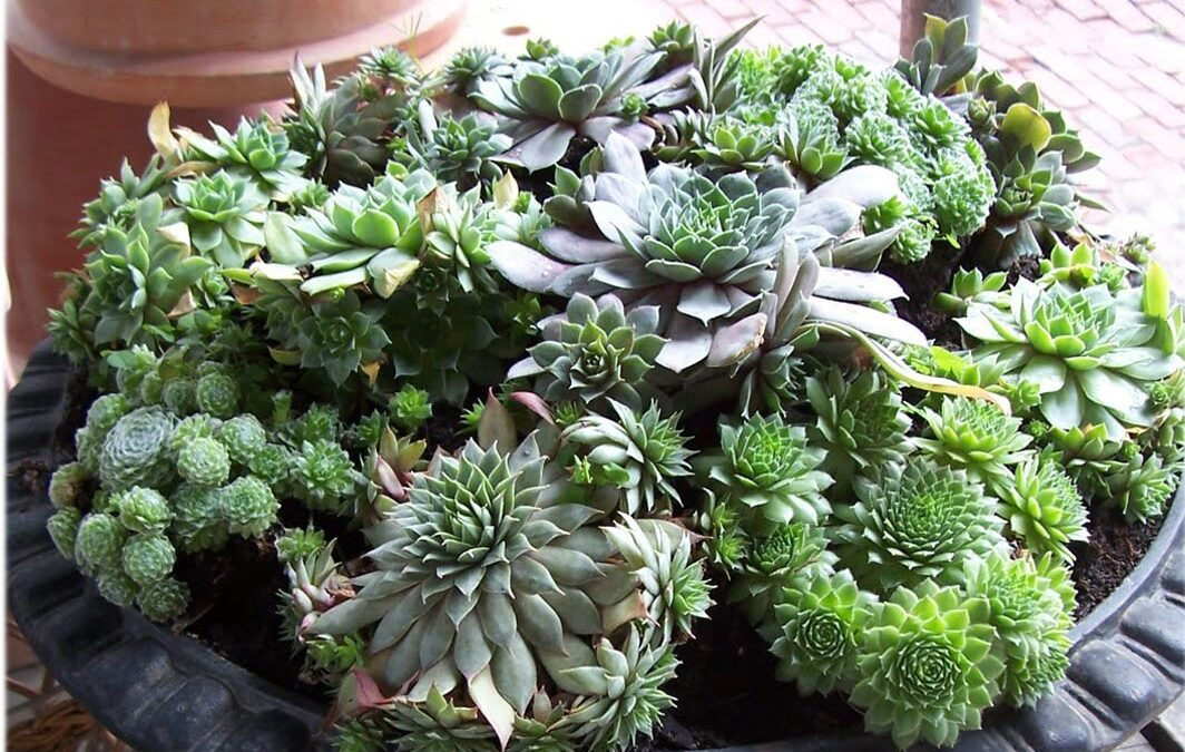 Things To Know About Succulent Before Buying It