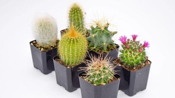 Easy Succulent Plants Decorating Ideas