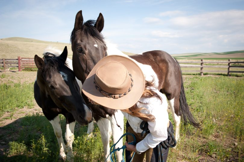 Why You Should Go on a Guided Horseback Trip on Your Next Vacation