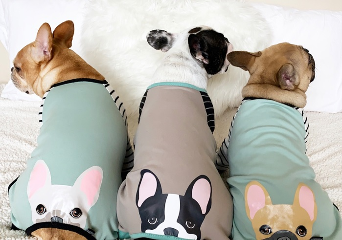 Follow These To Make Your Frenchie Beautiful