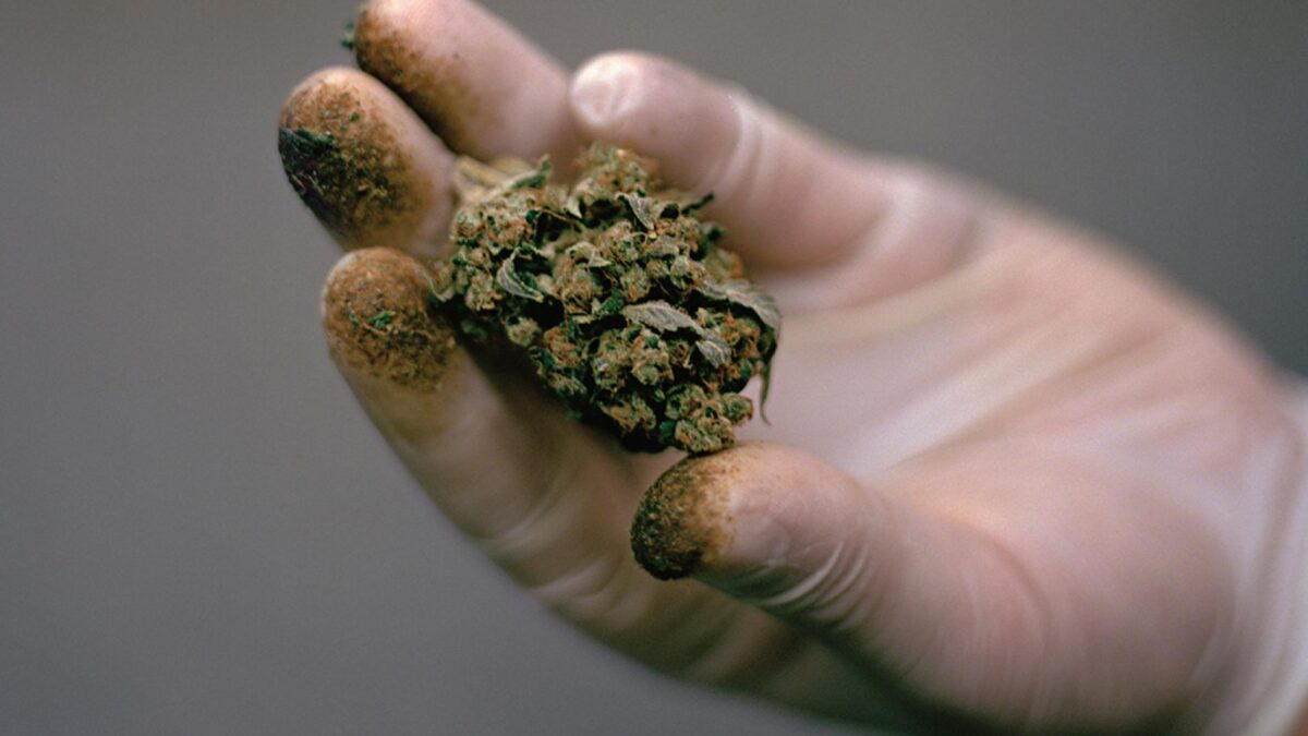 Before Taking A Regretful Step Get The Best Cannabis In Canada