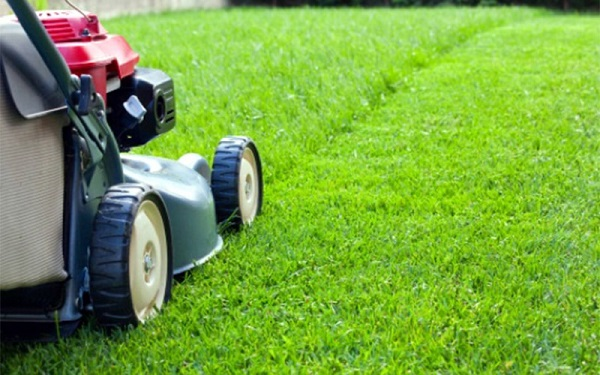 How to Keep Your Lawn Care Company from Ripping You?