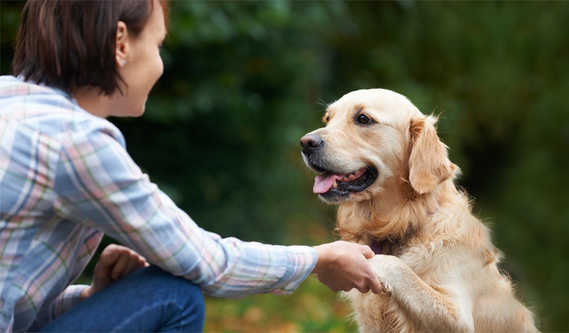 How to choose the right dog board and train program in Illinois