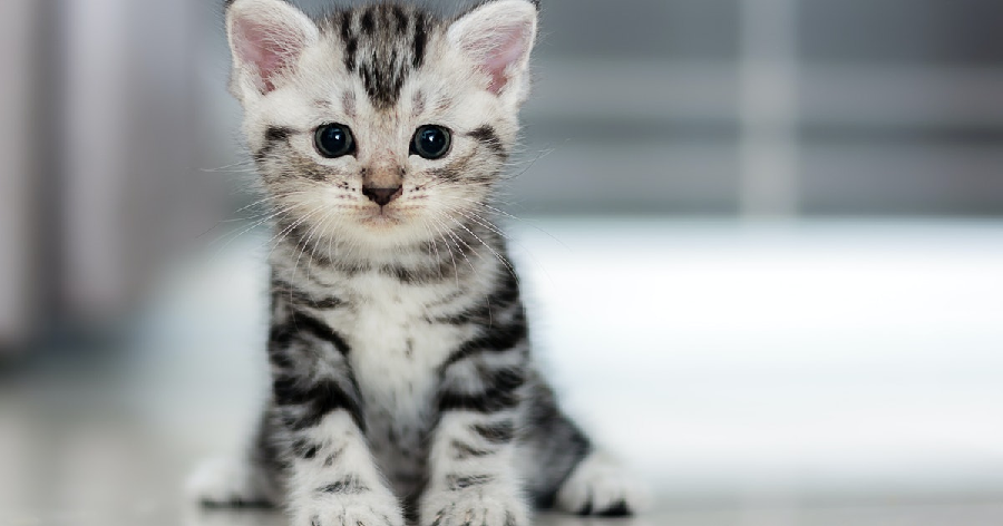 Best Cat Breeds for New Owners