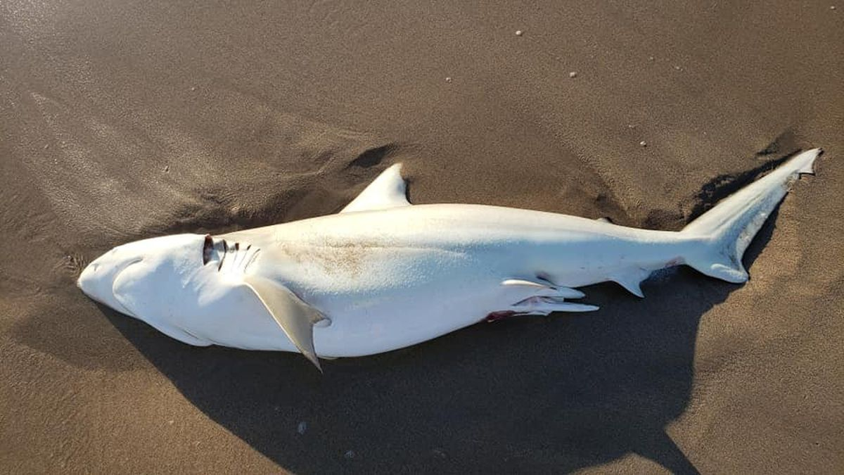 An Overview and Significance of South Florida Shark Fishing