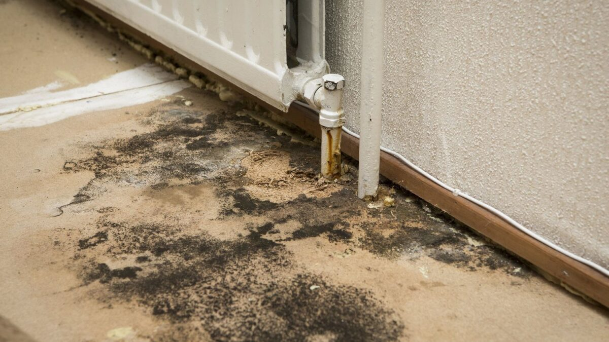 What is a Damp Study of your home?