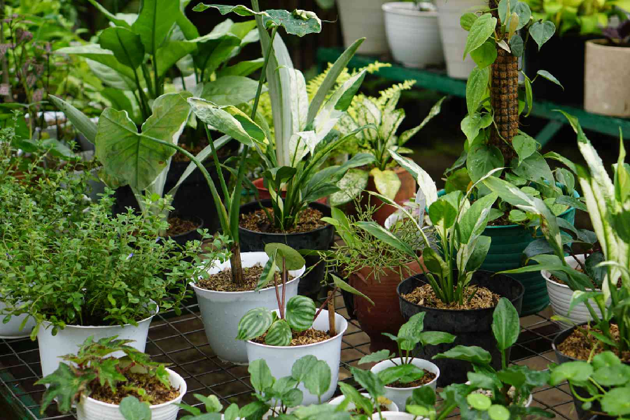 Tips for Choosing Your Garden Containers